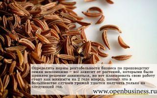Как открыть бизнес по производству семян