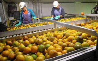 Свой бизнес: производство фруктовых и овощных соков