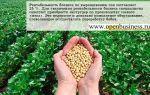 Фермерский бизнес: выращивание сои