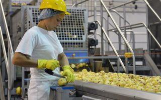 Свой бизнес: переработка и консервирование картофеля