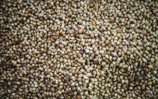 Производство семян как бизнес: рентабельность 40-50%