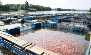 Свой бизнес: прудовое рыбоводство