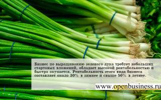 Свой бизнес: выращивание зеленого лука