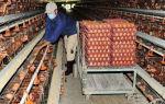 Рентабельный бизнес: производство куриных яиц