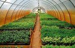 Выращивание перепелов – прибыльный бизнес