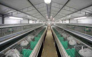 Бизнес-план фермы по разведению кроликов