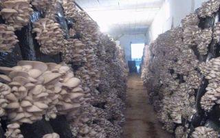 Готовый бизнес-план по выращиванию грибов (вешенка)