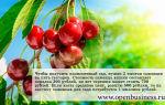 Свой бизнес по выращиванию вишни