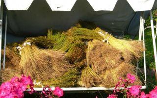 Как открыть бизнес по выращиванию льна