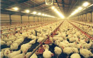 Бизнес-план: производство мяса птицы и пухо-перового сырья (продолжение)