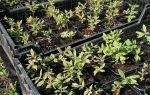 Как открыть бизнес по выращиванию саженцев