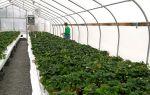 Открытие бизнеса: мидийная плантация