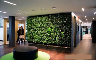 Озолотиться на озеленении: как открыть бизнес по производству и монтажу фитостен
