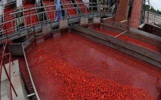 Свой бизнес по производству томатной пасты
