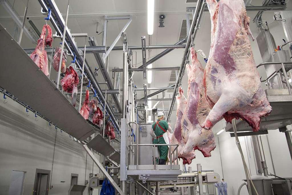 Мясное скотоводство свой бизнес по производству говядины