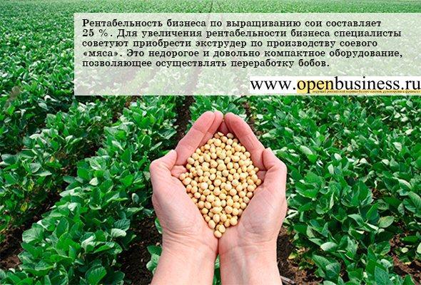 Бизнес план комплекса по переработке фасоли. Выращивание бобовых культур как бизнес. Фасоль