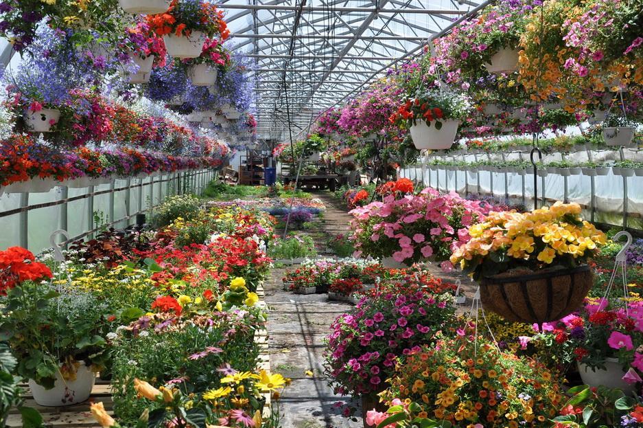 Комнатные цветы как бизнес