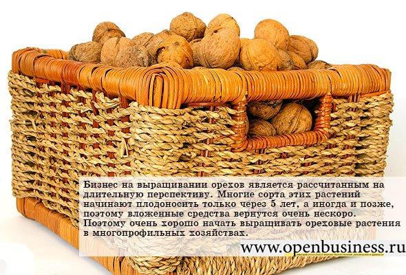 Сколько можно собрать орехов с одного дерева