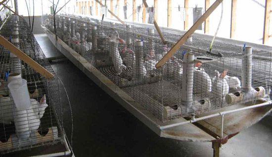 Разведение кроликов как бизнес, выгодно или нет: бизнес-план фермы с расчетами, для начинающих
