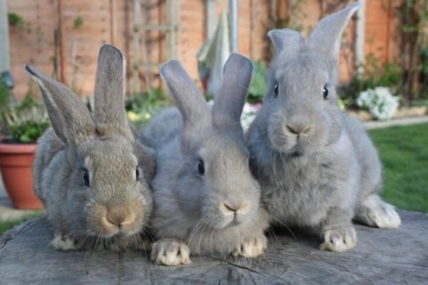 Кроличья ферма с нуля