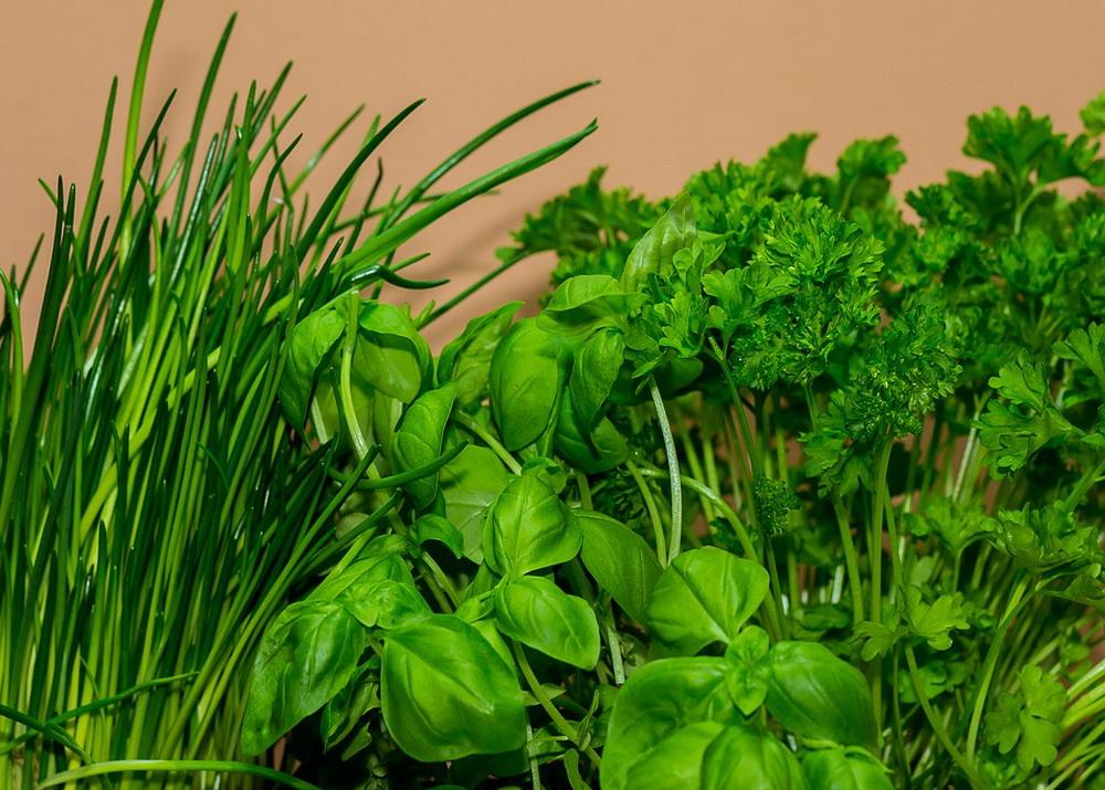 Выращивание зелени как бизнес — идеи, технологии, расходы и прибыль