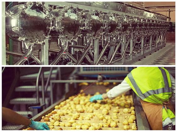 Бизнес план переработки картофеля