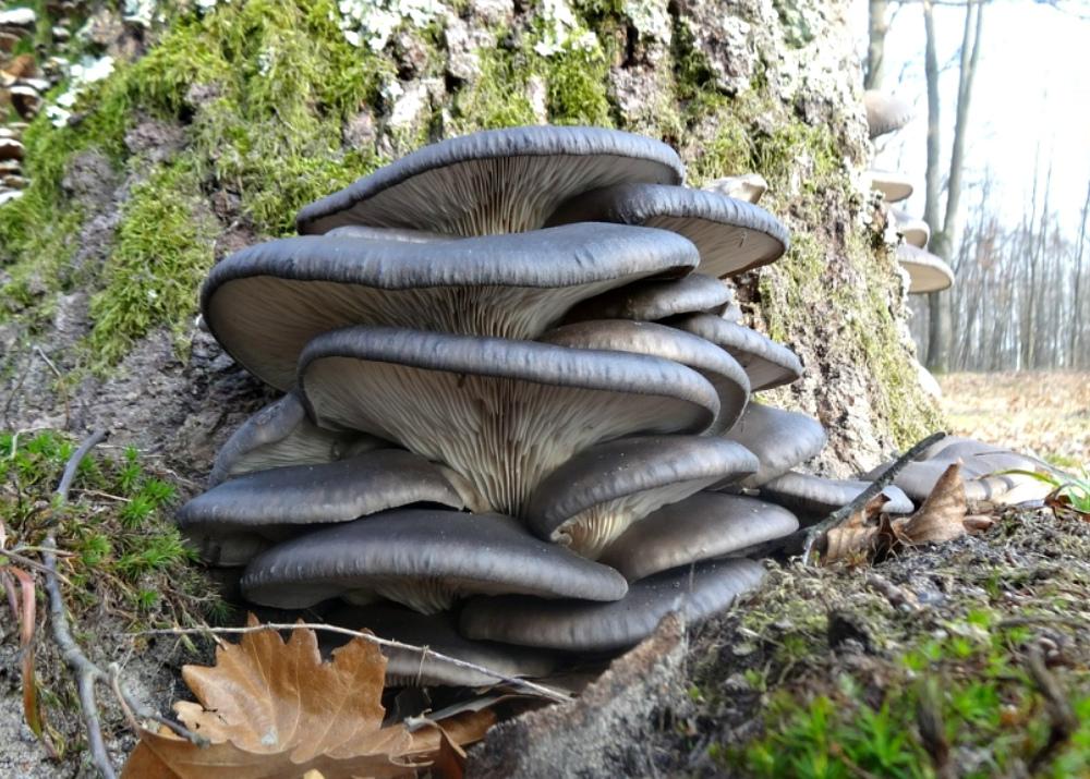 Свой бизнес: выращивание и продажа грибов (вешенок и шампиньонов)