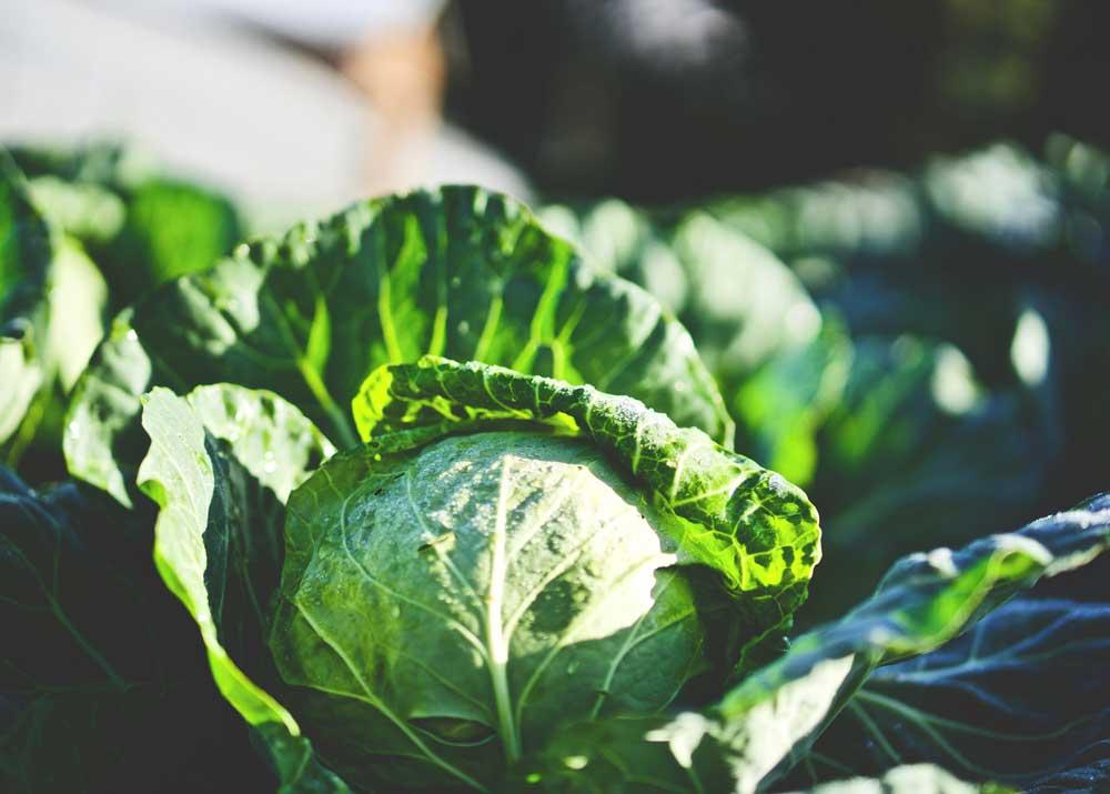Бизнес план компании по производству удобрений