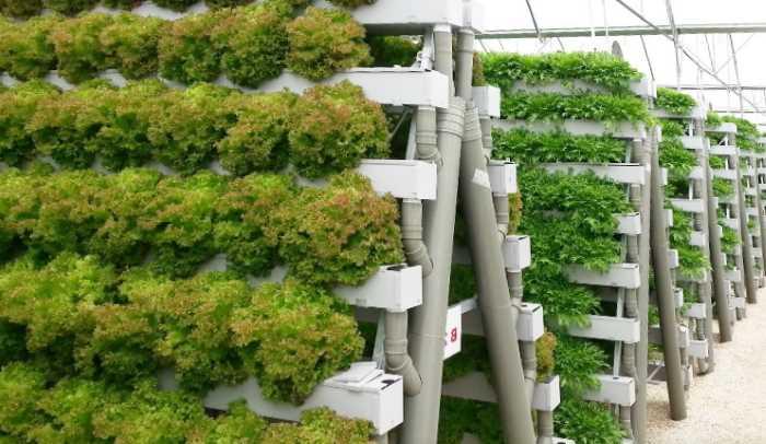 Прибыльный бизнес: выращивание зелени на продажу