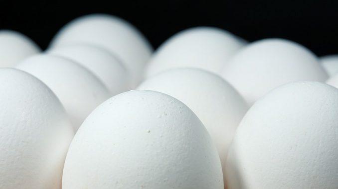 Бизнес на 100 тысяч рублей: зарабатываем на куриных яйцах