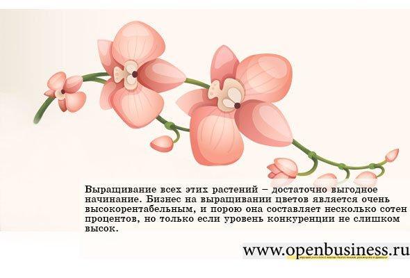 Как вырастить хризантемы в теплице на продажу